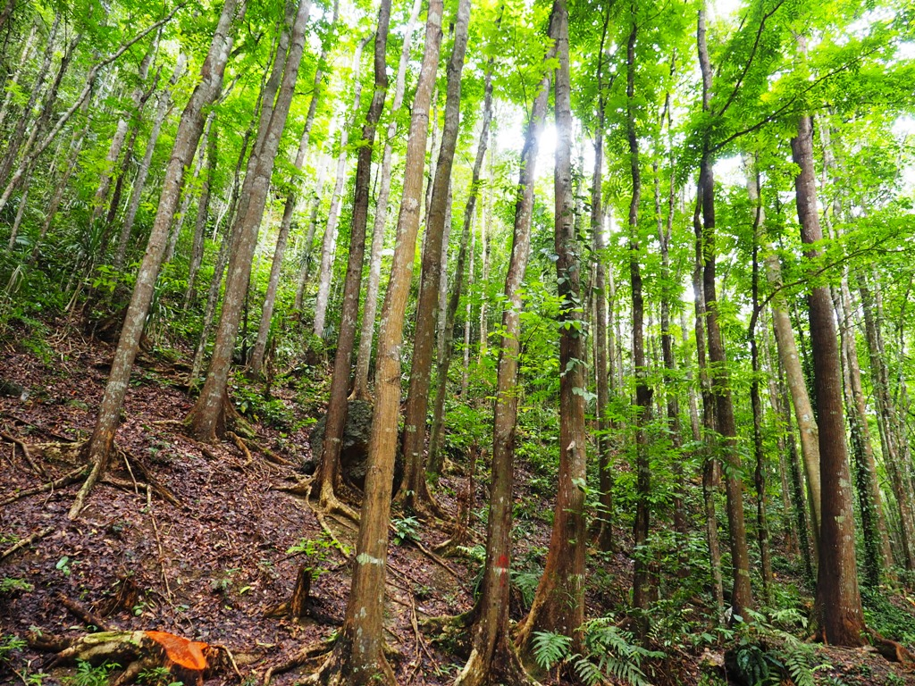 las deszczowy bohol