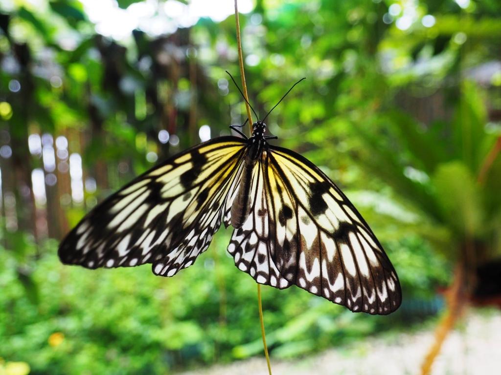 bohol butterfly sanctuary